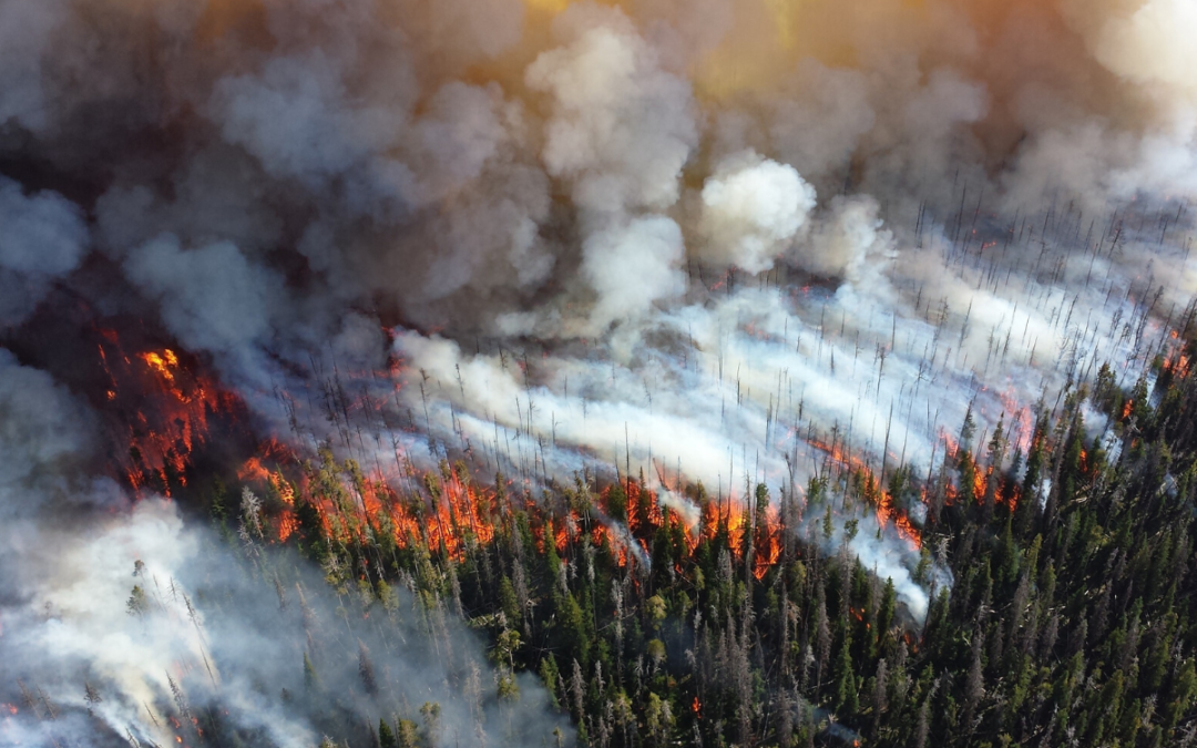 Wildfires Artificial Intelligence