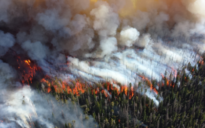 Detecting Wildfires with Artificial Intelligence
