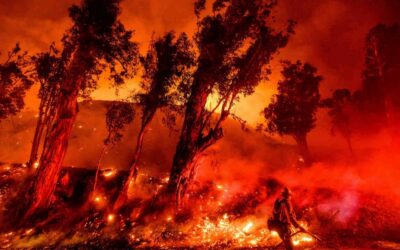 How-to Stop Wildfires through Flame and Smoke Detection