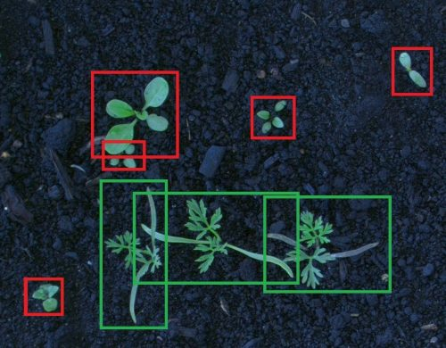 Detecting Weed Through Edge Computer Vision to Reduce Environmental Footprint